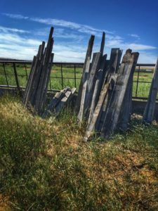 Some weathered barn wood ready to salvage from the old corrals.